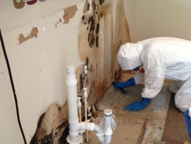 Commercial Mold Removal