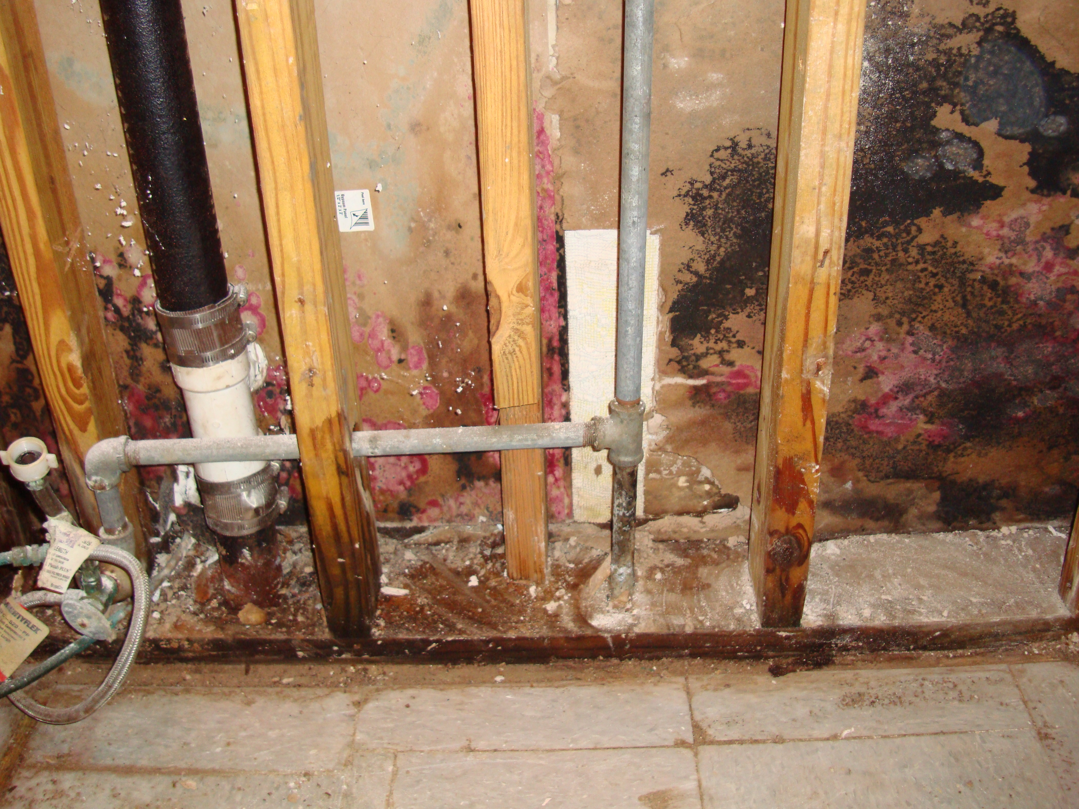 Mold Remediation in Commercial Building